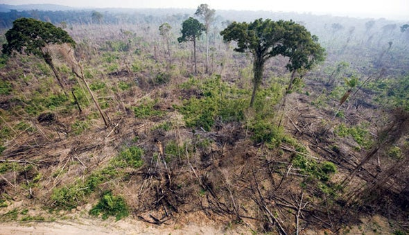 deforestation and climate change facts